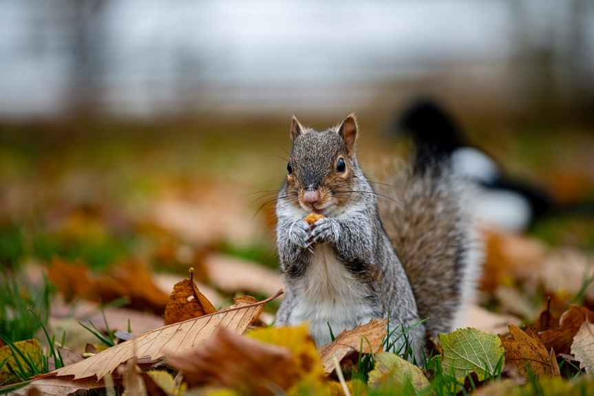 Squirrel Thoughts: When Your Focus Leaves YouBlind
